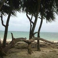 Wandoor Beach 2/4 by Tripoto
