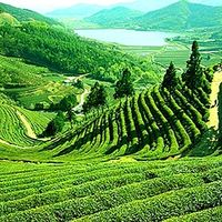 Happy Valley Tea Estate 2/11 by Tripoto