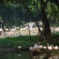 Jurong Bird Park 5/40 by Tripoto