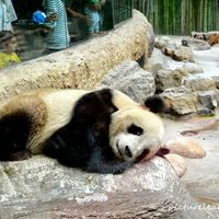 Beijing Zoo 3/3 by Tripoto
