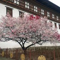 Tashichho Dzong (Thimpu Dzong) 2/2 by Tripoto