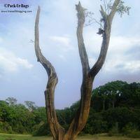 Thekkady Wild Corridor 2/12 by Tripoto
