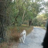 Bannerghatta Road 3/31 by Tripoto