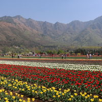Tulip Garden 4/6 by Tripoto