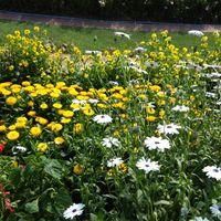 Mughal Garden 2/6 by Tripoto