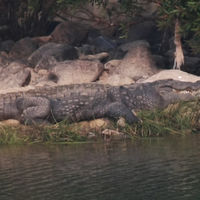 Panna National Park 5/12 by Tripoto