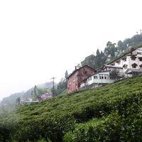 Happy Valley Tea Estate 3/11 by Tripoto