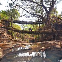 Jingmaham Living Root Bridge 3/33 by Tripoto