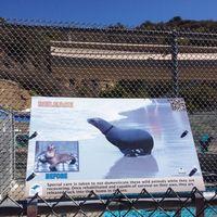 Pacific Marine Mammal Center 2/4 by Tripoto