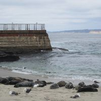 La Jolla Cove Beach 5/5 by Tripoto