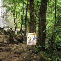 Manoa Falls Trail 3/9 by Tripoto