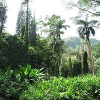 Manoa Falls Trail 4/9 by Tripoto