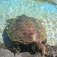 Sea Life Park Hawaii 5/8 by Tripoto