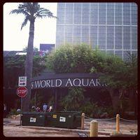 Dallas World Aquarium 5/8 by Tripoto