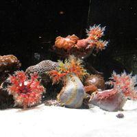 Dallas World Aquarium 4/8 by Tripoto