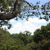 Cogon EcoTourism Park 3/9 by Tripoto