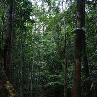 Cogon EcoTourism Park 4/9 by Tripoto