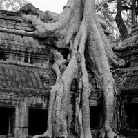 Ta Prohm 4/4 by Tripoto
