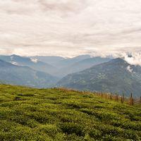 Temi Tea Garden 5/9 by Tripoto