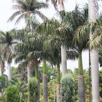 Pinjore Gardens 5/9 by Tripoto