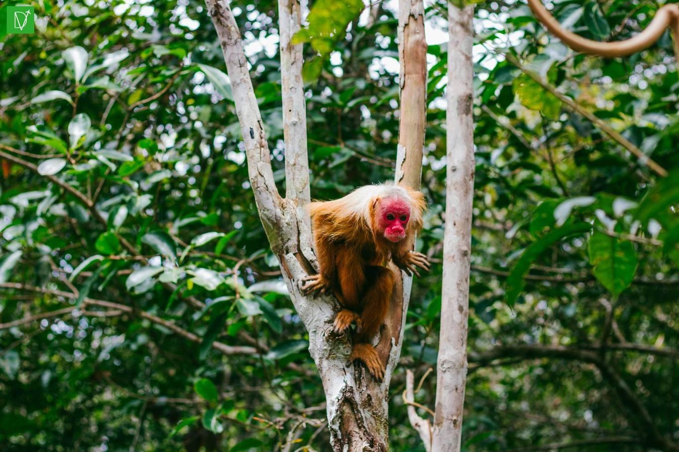 Photo of Amazonas Brazil 2018 - Nature of life By Matan Cohen Donttellma