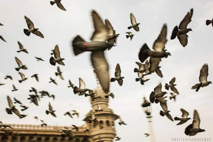 Photo of Hyderabad By Amritha Padmakumar