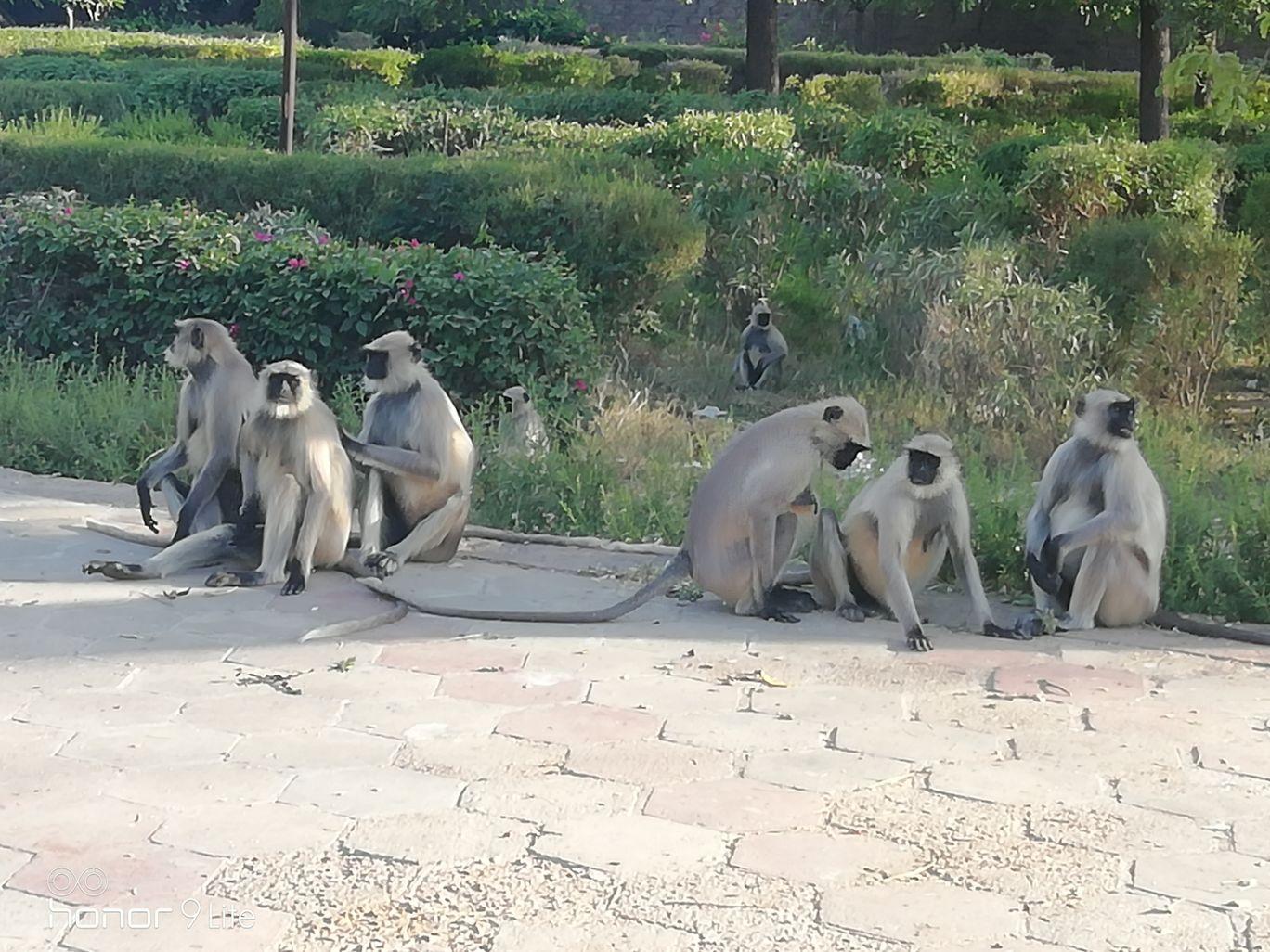 Photo of Jodhpur By Aman Mansuri