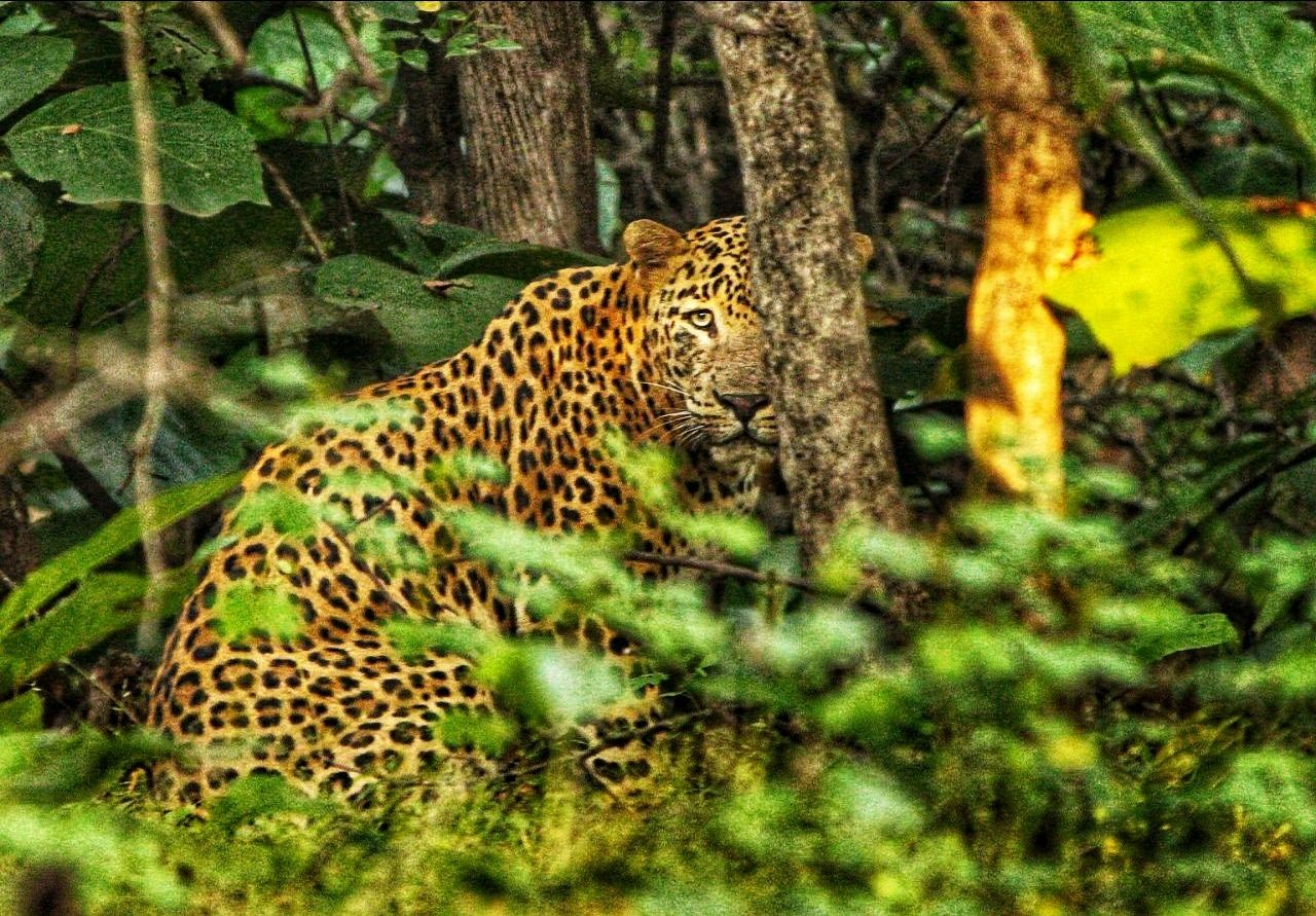 Photo of Sasan Gir By Bhavin Patel