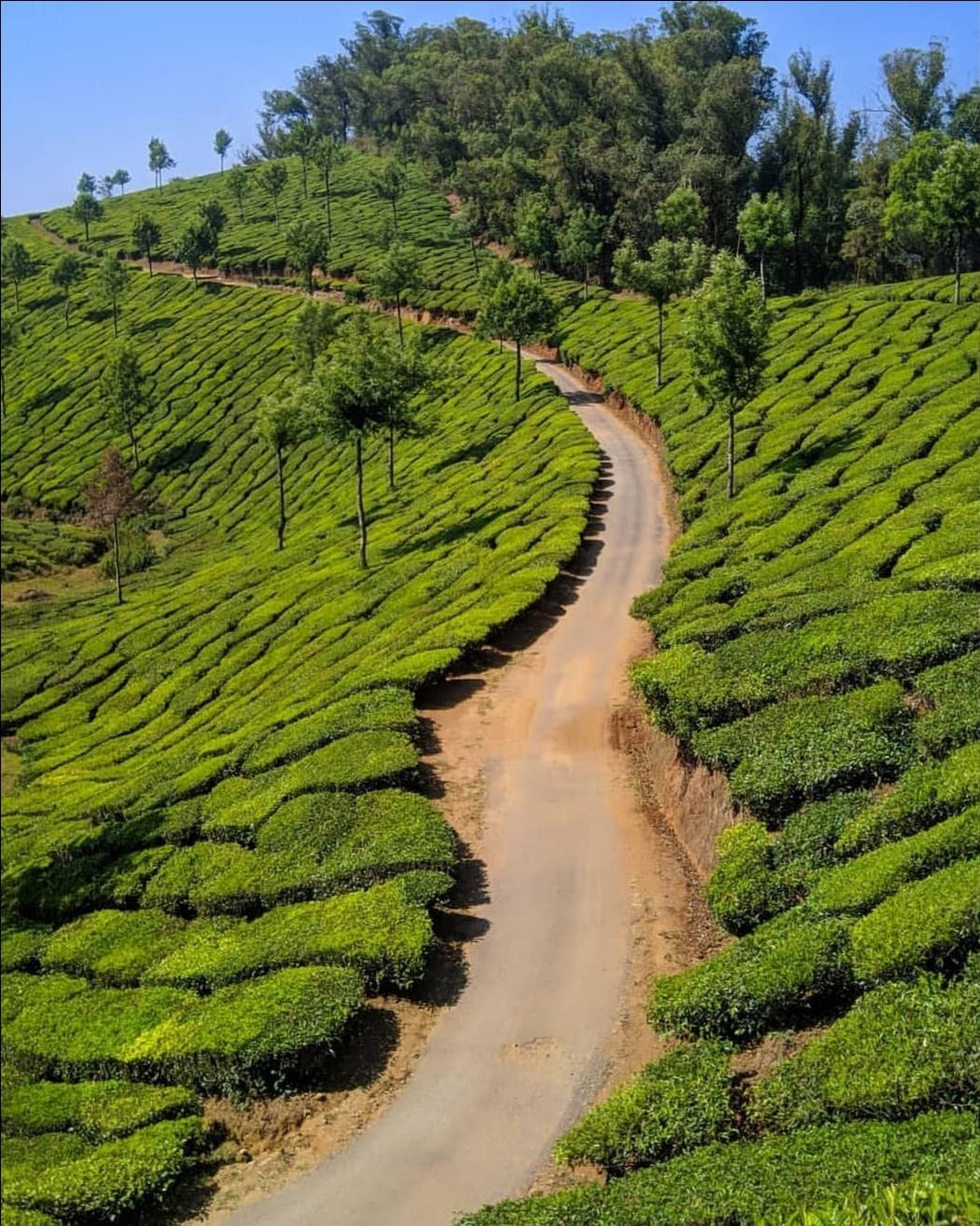 Photo of Munnar By Amaldas K H