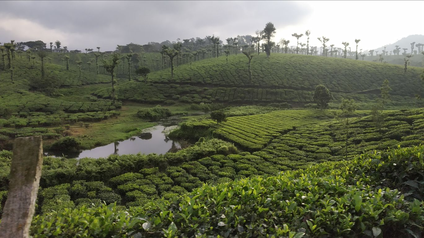 Photo of Nelliyampathy Hill View 1 By george kollanoor