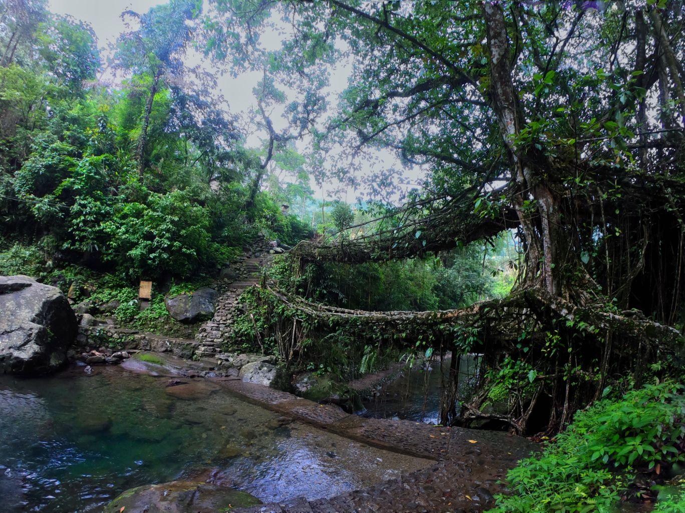 Photo of Double Decker Living Root Bridge By d dash