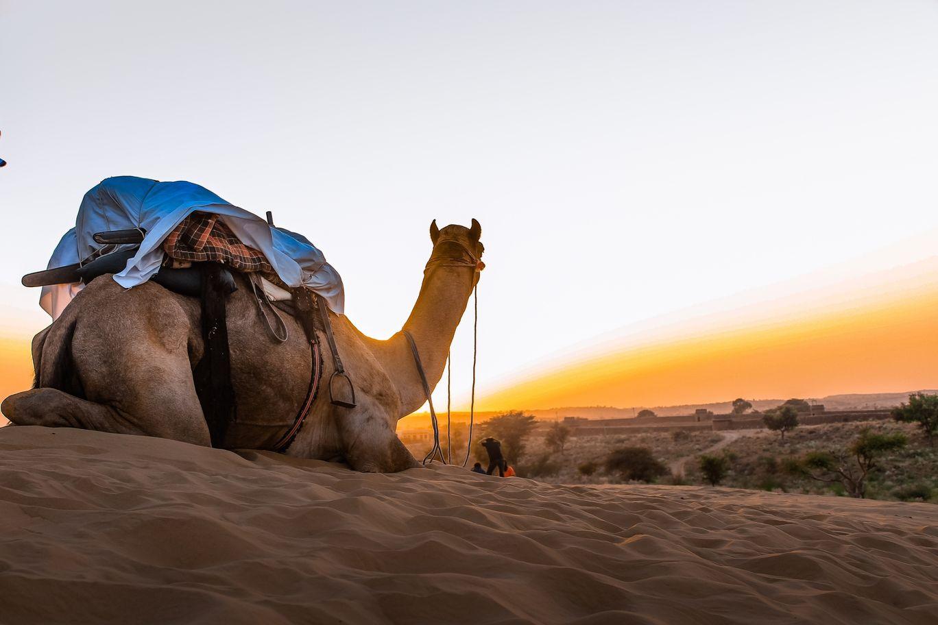 Photo of Thar Desert By Nikhlesh tyagi