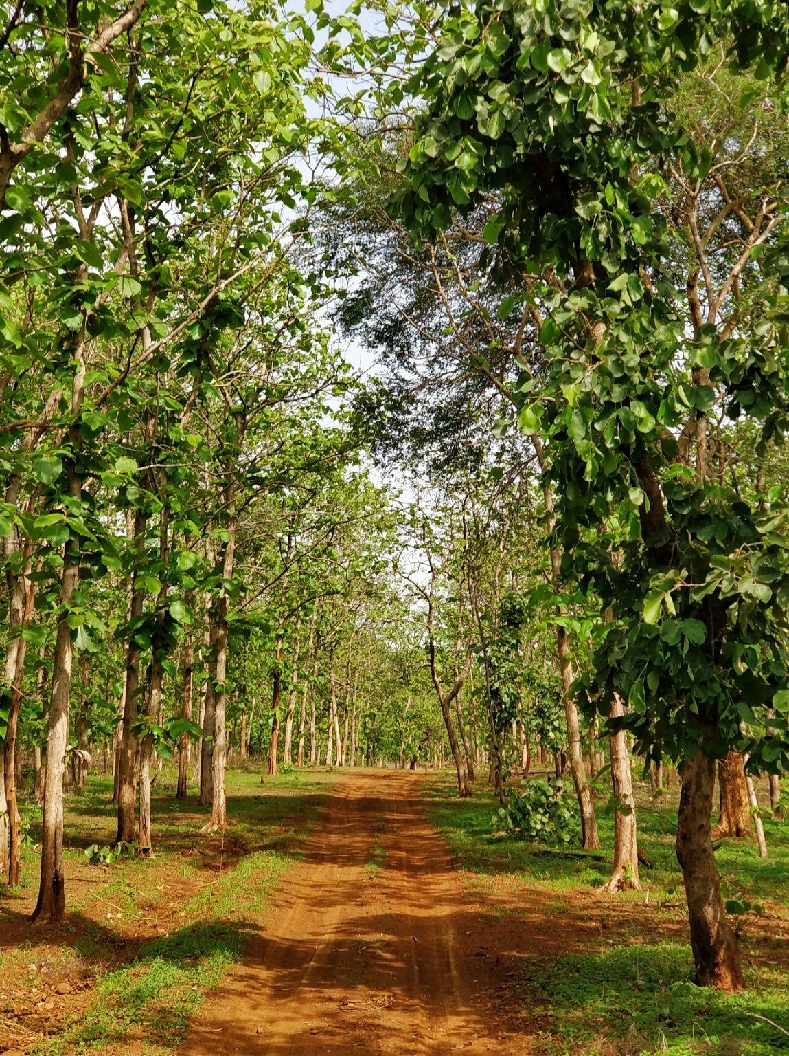 Photo of Tipeshwar Wildlife Sanctuary By vimal chavda