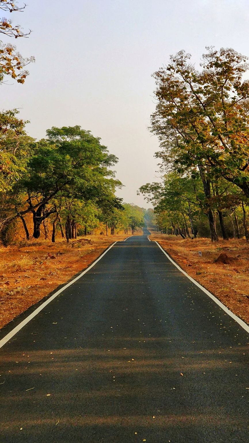 Photo of Tadoba Andhari Tiger Reserve By vimal chavda