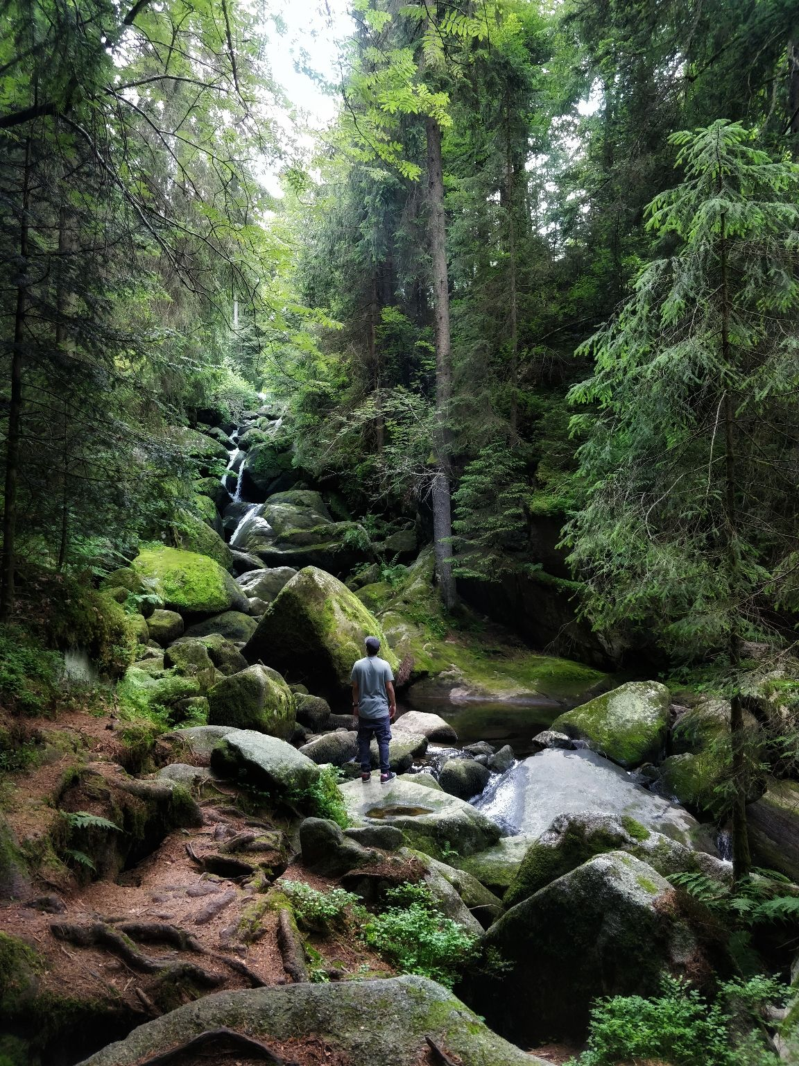 Photo of Black Forest By Gopu Ganesh