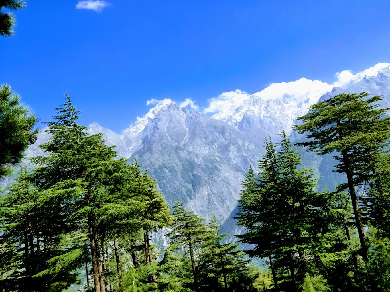 Photo of Kalpa By Shakti Lohan