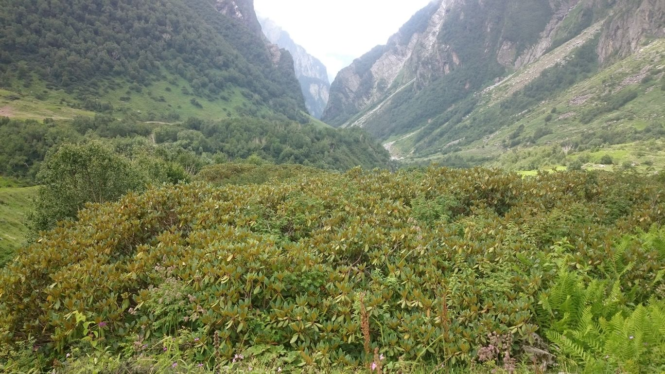 Photo of Valley of Flowers National Park By Dr. Shweta Babanagare