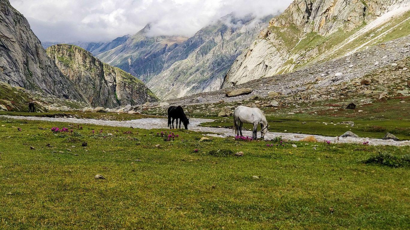 Photo of Hampta Pass Trek Camp Himalayan Mountain Sojourns By Moon Bohra