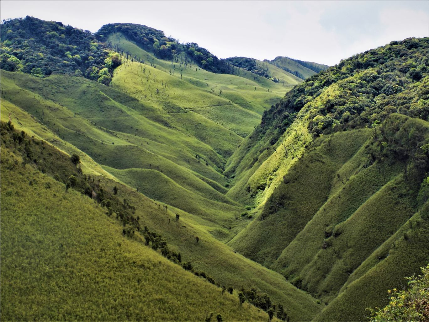 Photo of Dzükou Valley Trek By Pushan Bhattacharya