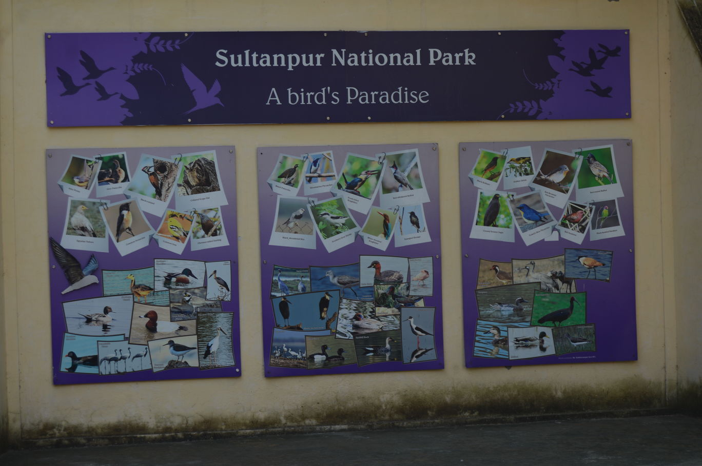 Photo of Sultanpur National Park By Asif Rashid