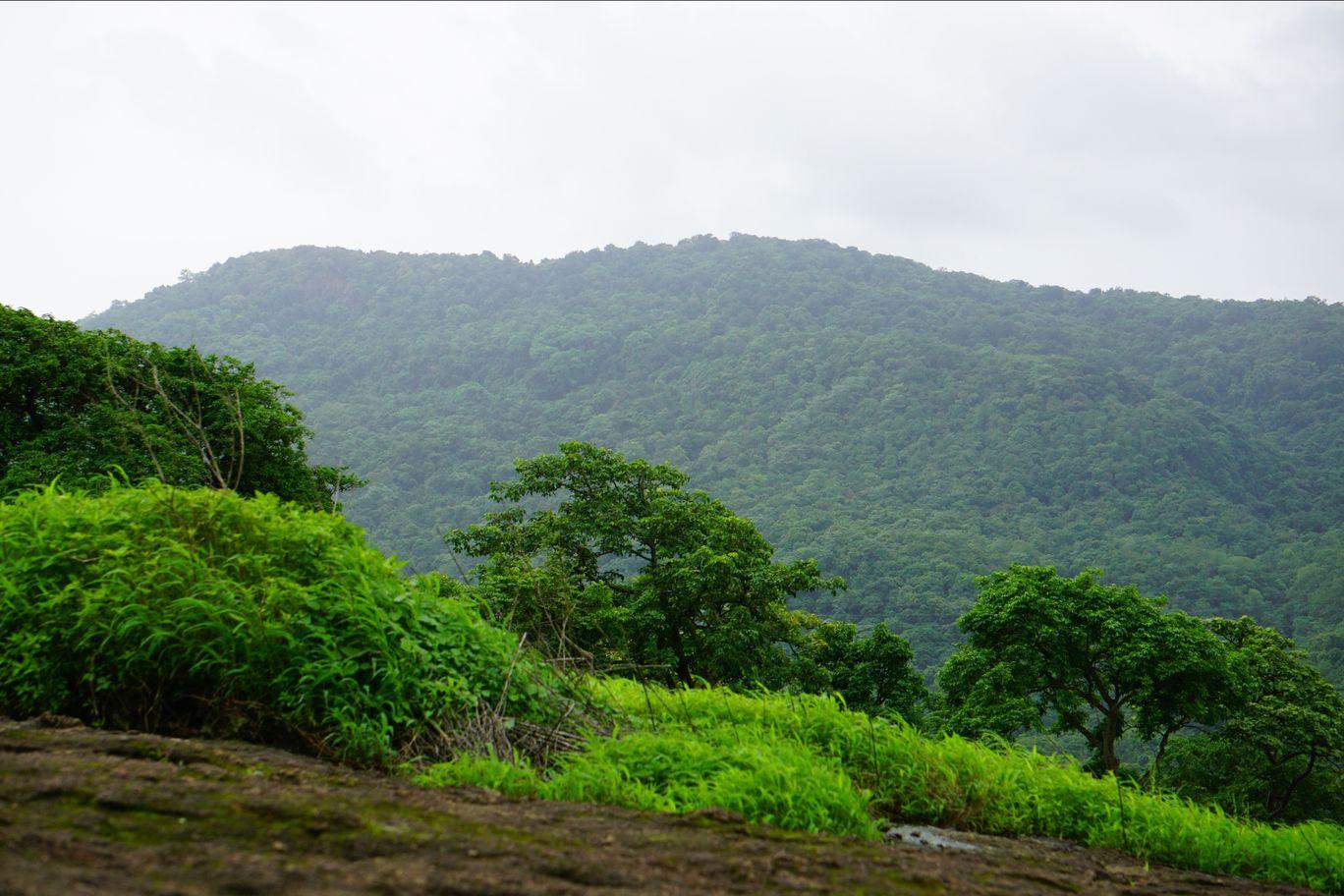 Photo of Sanjay Gandhi National Park By Sagar Bochare