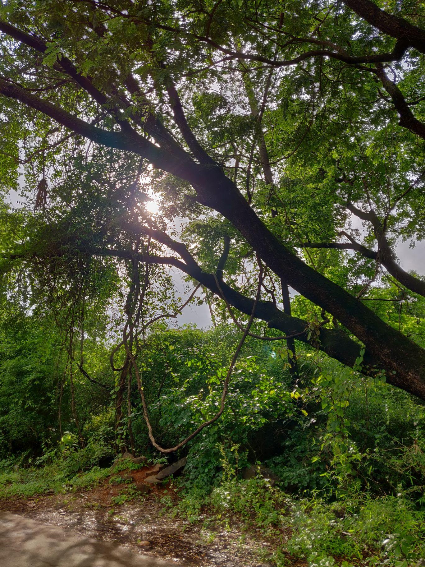 Photo of Sanjay Gandhi National Park By globe_trotter_forever