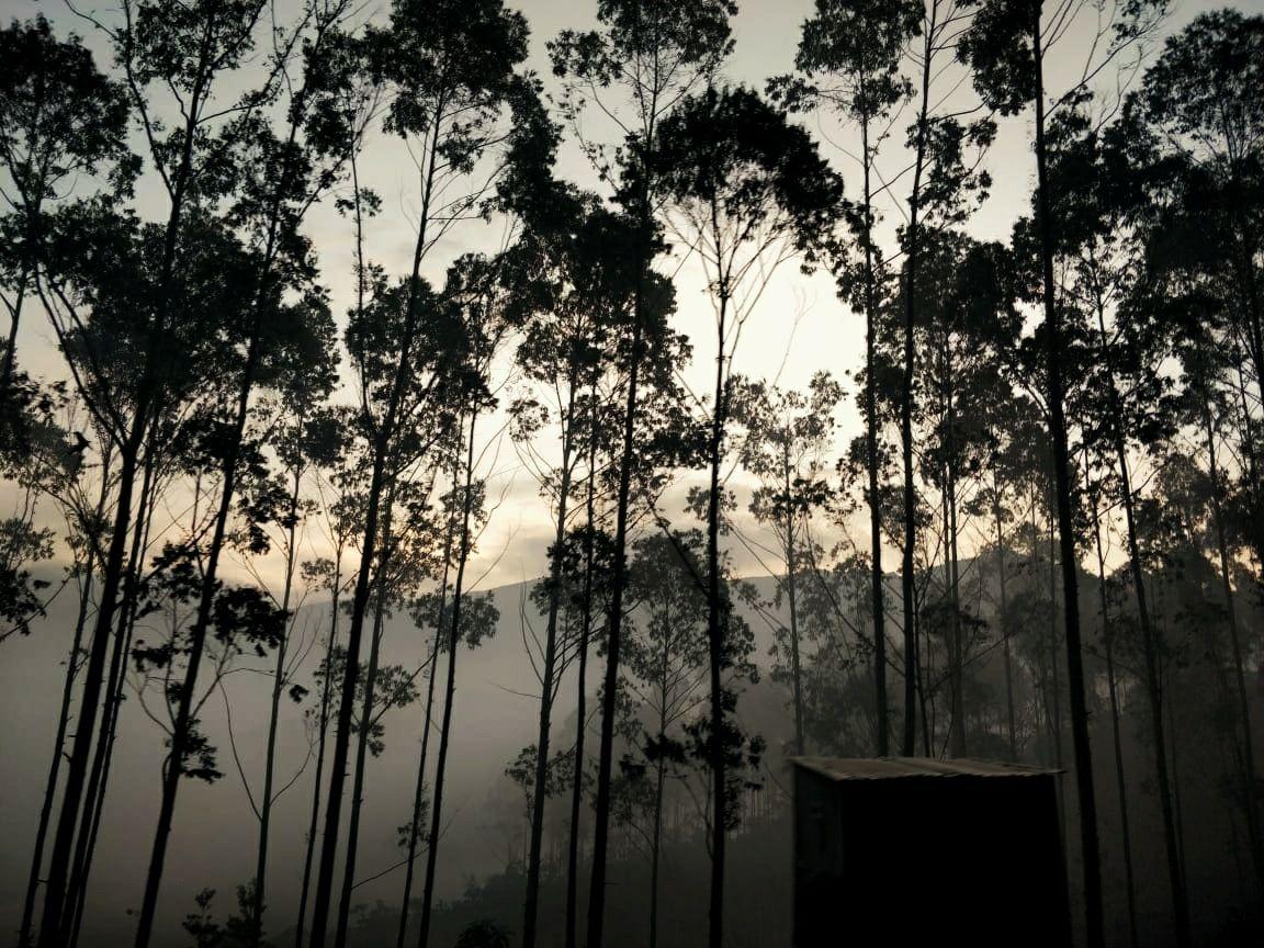 Photo of Kerala By unplugged_thinker