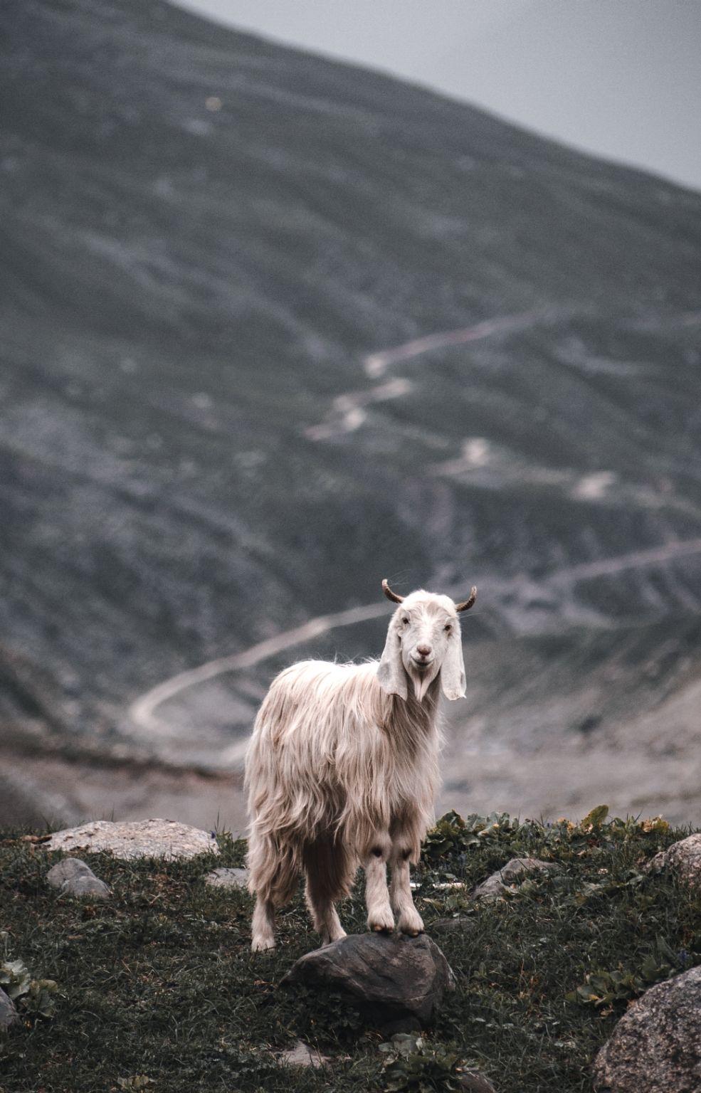 Photo of Spiti Valley By Rohan Shahi
