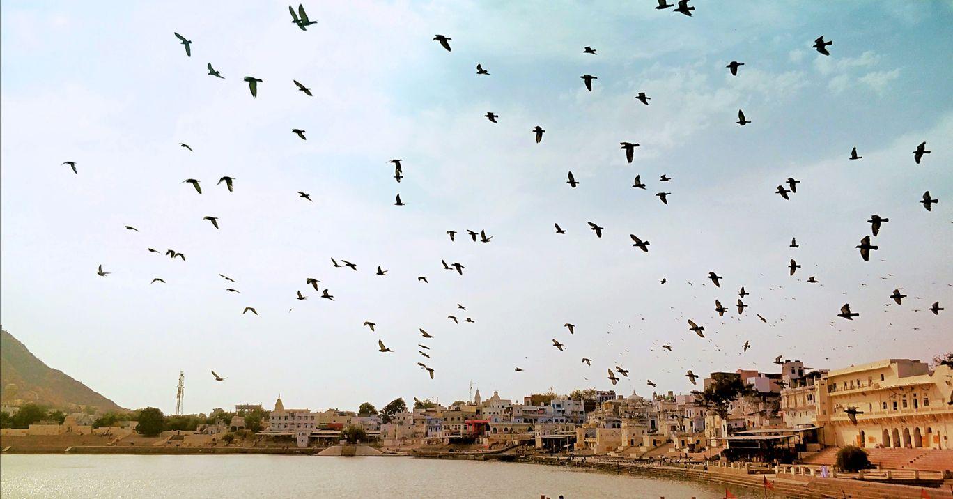 Photo of Pushkar Lake By ritzwanderland