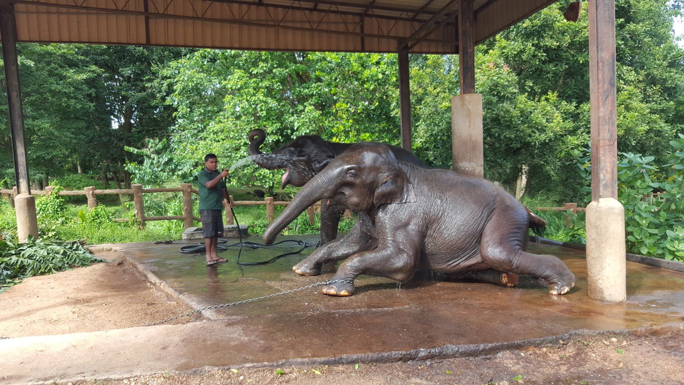 Photo of Pinnawala Elephant Orphanage Bus Stop By Shraddha Subramanian