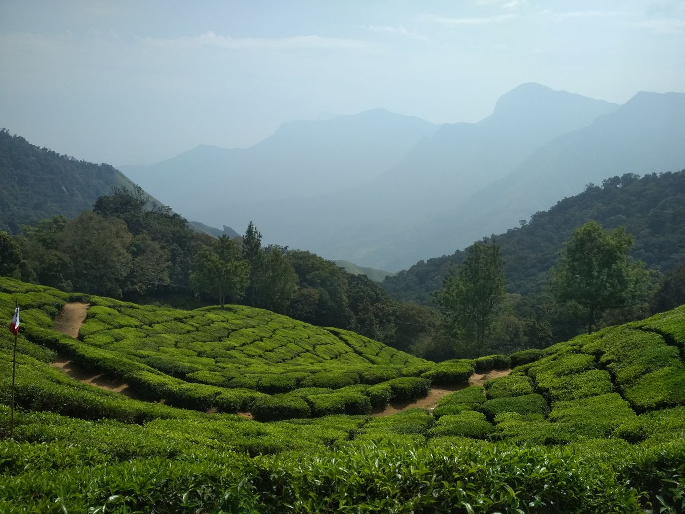 Photo of Tea Garden Munnar Food Grains By Sakshi Sharma