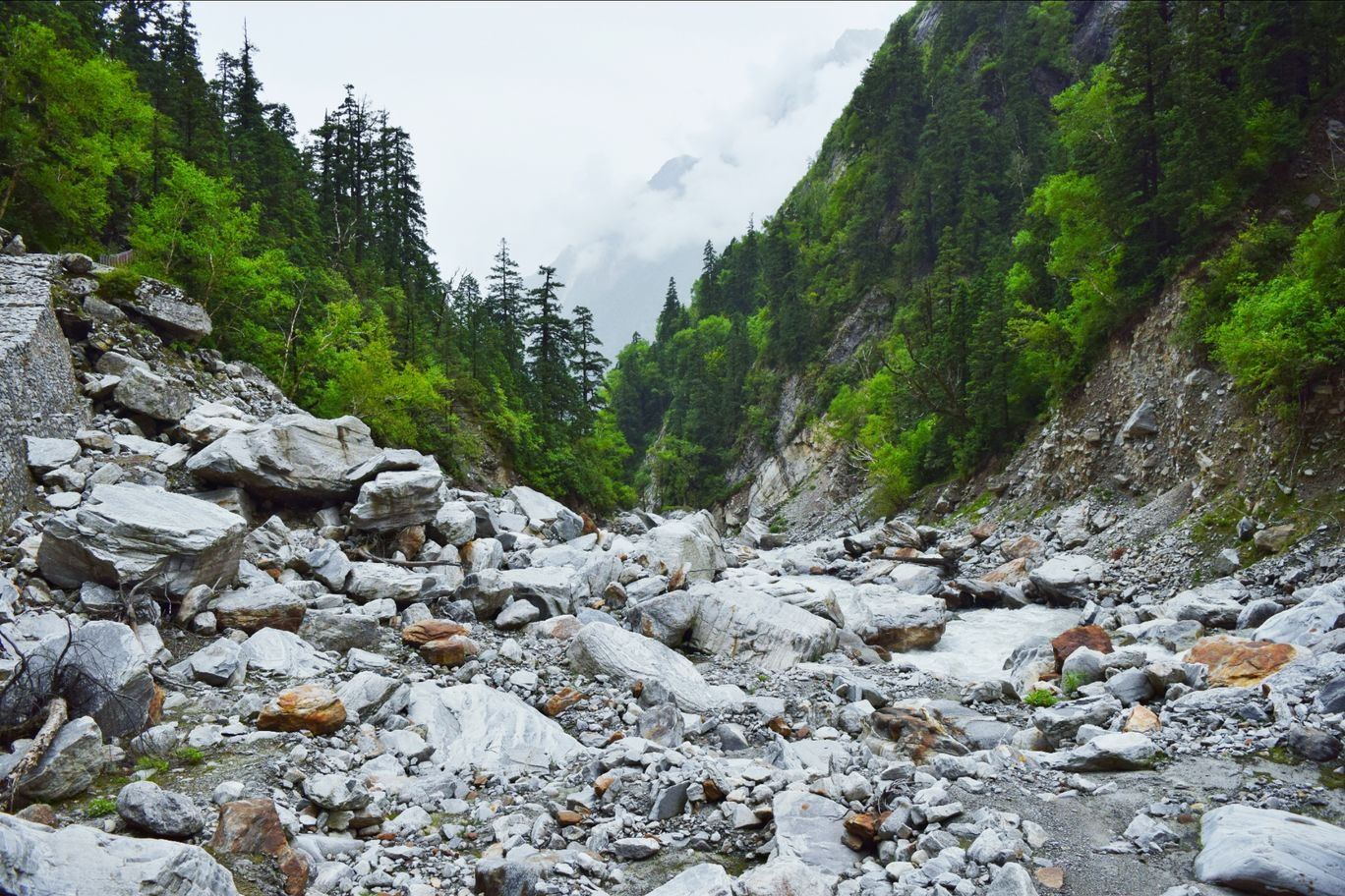 Photo of Valley of Flowers National Park By Ashutosh Ghadge