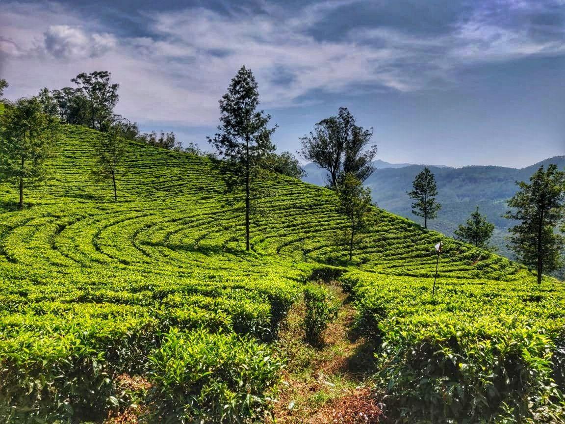 Photo of Kerala By Sonal Singh