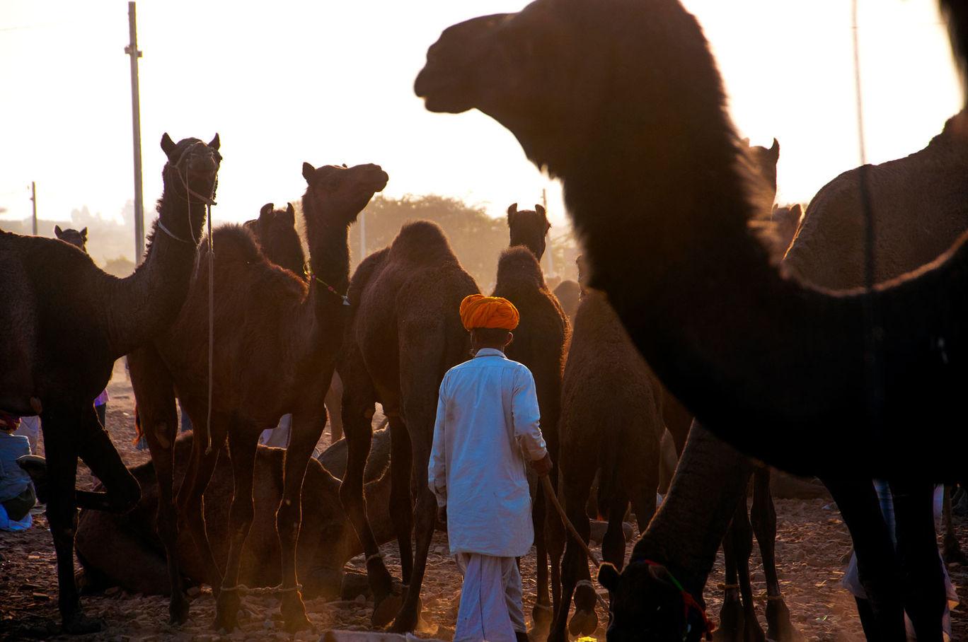 Photo of Pushkar Fair Photo Story Instagram @palakmittal #rajasthaninphotos By Palak Mittal